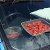 炎天下の車内でミニトマトを干しまくる