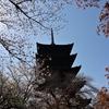 🌸京都 東寺で五重塔と桜を撮影🌸