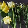お花の定期便アプリ『Flower』使ってみた