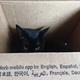 今日の黒猫モモ&白黒猫ナナの動画ー774