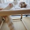 猫の暑さ対策 試行錯誤