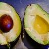【林先生が驚く初耳学】アボカドエックボートは健康にいい食べる美容液