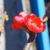 ちょっとヒトコト…フタコト…ミコト ~No.32~  春のあしおと-其の弐-庭の点景