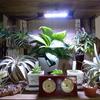 植物コーナー
