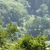 松之山付近の景色と植物
