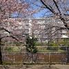 「四月は君の嘘」聖地巡礼:三度目の春