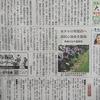 今日の「ちたっ子」&ホタル放流イベントの記事@中日新聞