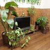 育てやすい観葉植物5選。水やりのみで元気に10年。