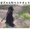 愛犬の看取り方を考える・犬にもある痴呆症