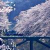 「山北さくらまつり」で桜と電車を撮った。