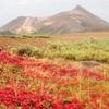 日本一早い紅葉を楽しみに大雪山縦走