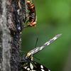 🦋東京都 荒川自然公園で昆虫を撮影🐝
