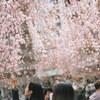 上野公園桜模様 #filmphotography