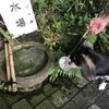 伊豆旅行 4 デカチワワんと行く【愛犬と一緒にお参りできる神祇大社】
