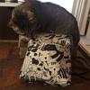 猫柄のがま口御朱印帳バッグが欲しかったのでminneでオーダーして作ってもらった