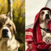 一緒ならエベレスト山でも上昇する犬と猫