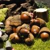 外苑前の「l'eau(ロー)」で蝦夷鹿のロースト ふきのとうの天ぷら風、鰆ときのこ、白子と菊芋、スミイカとくるみ他。、