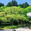 新緑の『千如寺』
