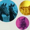 犬や猫、猿や馬のための音楽の作り方