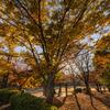 Feeling Autumn#2