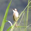 日本・海外の野鳥の魅力まとめ【300種以上野鳥観察した鳥好きが紹介】