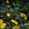 和宏さんの花巡礼「立花」 橅の道