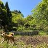 ①〜⑨【田舎の時代】ステイファームしよう!畑のいいところを全力で考えてみた。27選【永久保存版】