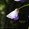 藤 フジ Wisteria floribunda