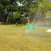 芝生の上の虹