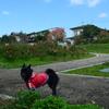 福山へ帰省。吉備SA&春日池公園に寄り道。帰省後横山海岸へ。(11月3日)