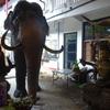 スリランカの寺院①