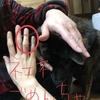 甲斐犬(飼い犬)に手を噛まれるぅッ❗️の巻〜ヾ(。`Д´。)ノ┌┛タイヘンダァ‼︎