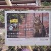 Photo No.354 / 猫といえば