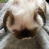 うさきの多頭飼いは可愛さに差が出るのか。