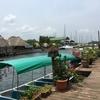 グアテマラ リゾート地 Rio Dulce を通って キリグア遺跡へ