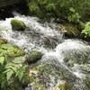 【北海道】神の子池に行ったらとっても神秘的だった!
