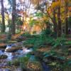 成田山公園に紅葉デート。