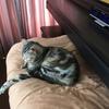 暑さに耐える猫