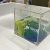 9月のアトリエレポートPART6〜洗濯のりと絵の具、でスライム作り