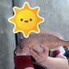カゴ釣りや天秤フカセ釣りで工夫する
