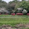 4.16(金・曇り)マンボウ蔓延・・小池のバカ! 新宿地下駐車場事故。