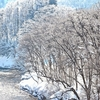 Winter colors 10 … 「 氷結の錦秋湖 」