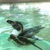 懐かしい雰囲気が魅力的!羽村市動物公園に行ってきました