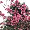 顔がかゆい!花粉皮膚炎は花粉症の症状の一つ。予防改善方法はあるの?