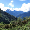 台湾高地の美麗アゲハ 1 - ホッポアゲハ -