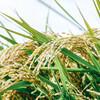毎日食べるお米の保存方法は?