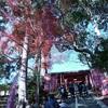 京都・山科の紅葉 毘沙門堂