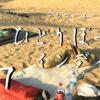 砂漠の街ジャイサルメールとインド疲れ! ひとりぼっちインディア07