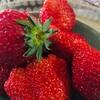 苺の季節ですね🍓