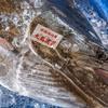 2020年7月31日 小浜漁港 お魚情報